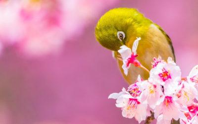 Apprécier la Beauté et l'Excellence, une vertu à cultiver pour ton bien-être